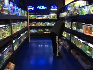 One of two large rooms full of fish at J&M Aquatics.